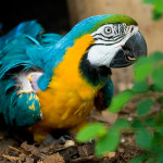 można już oglądać ciepłolubne papugi