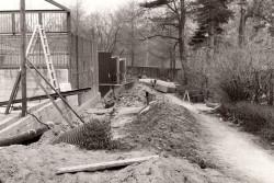 rok 1977, budowa pawilonu dużych kotów