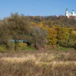jesienny Las Wolski