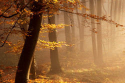 jesień w Lesie Wolskim