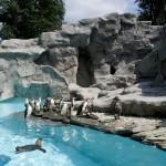 otwarcie pingwiniarni