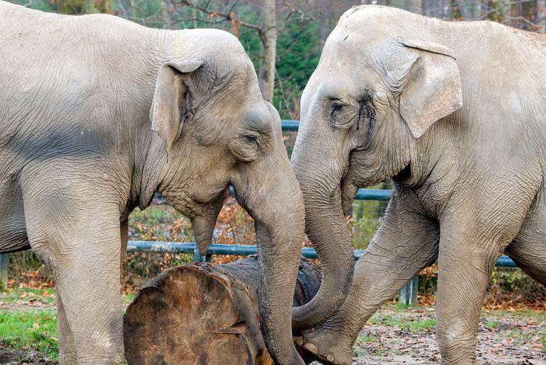 slonie.33