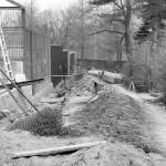 Budowa pawilonu dla wielkich kotów, lata 70-te