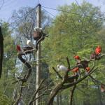 ptaki w nowej wolierze