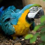 można już zobaczyć ciepłolubne papugi