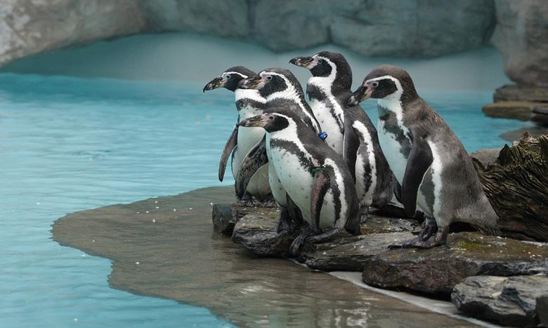 pingwinyjub